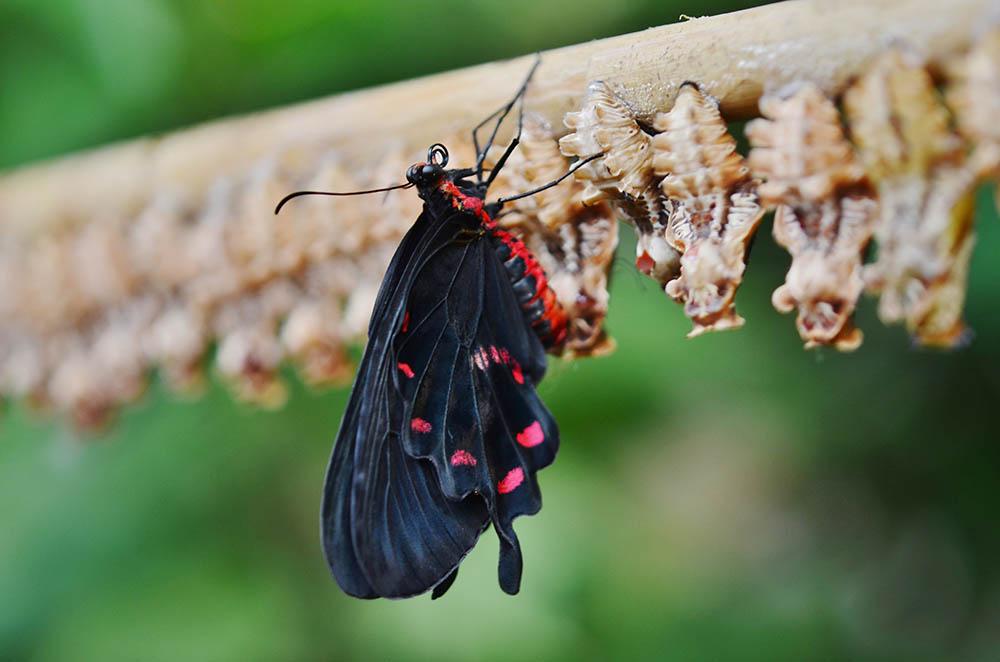 Generációváltás - Mint pillangó a bábjából