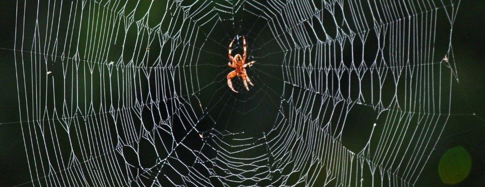 Pók a hálójában